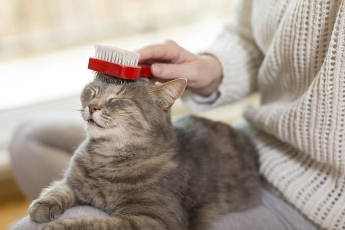 頭をブラッシングされる猫