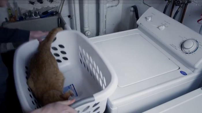 カゴに入って待つ猫
