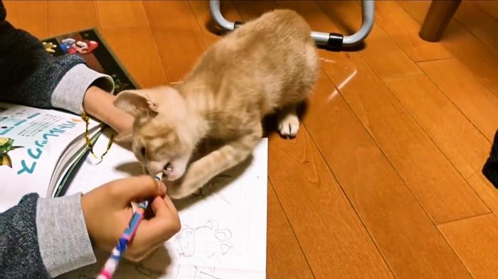 鉛筆をかじる子猫