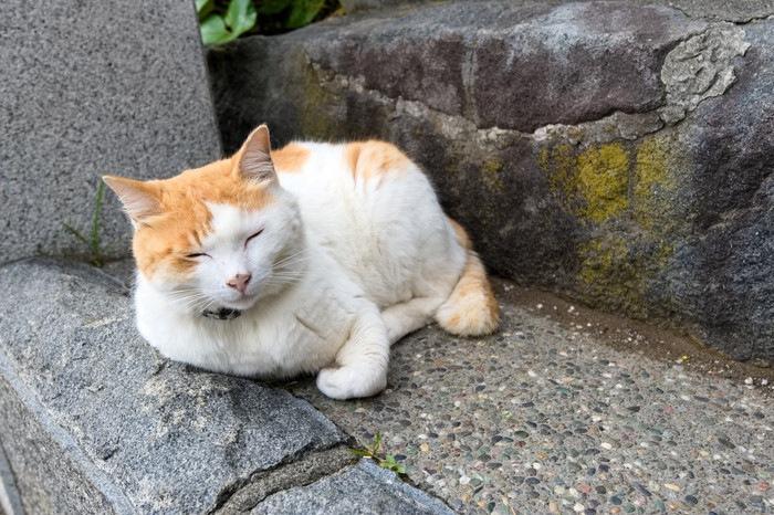 石の階段でくつろぐ猫