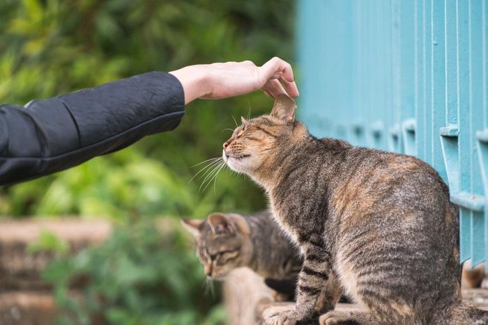 人に撫でられる猫