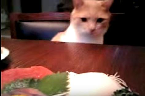 遠ざかる刺身を悲しそうに見る猫