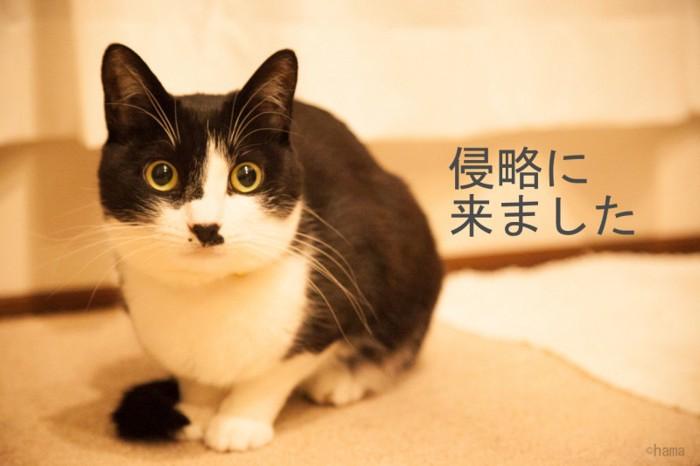 米子さんの猫