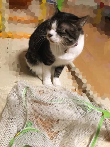 洗濯ネットの前でそっぽを向く猫