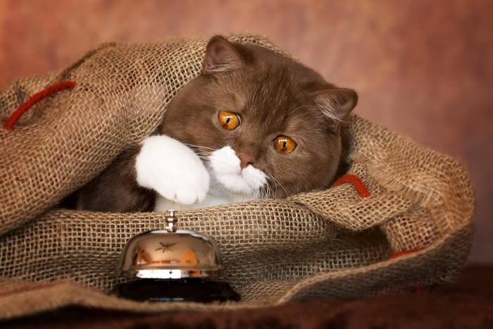 猫と注文ベル