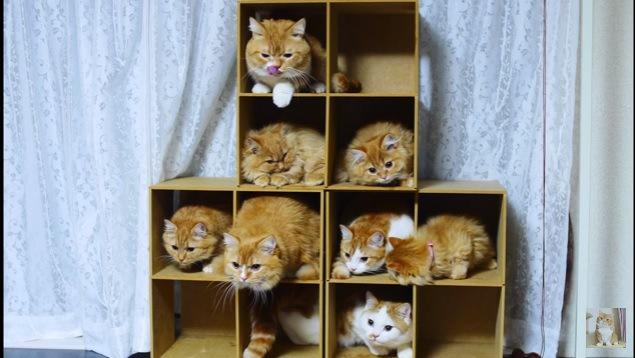 画面左のほうを眺める猫たち
