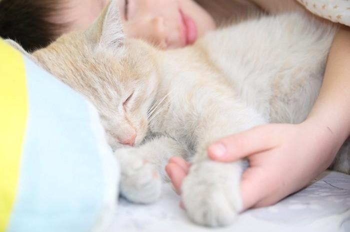 子供に寄り添って一緒に眠る猫