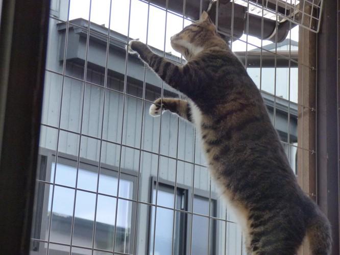柵に反応する猫