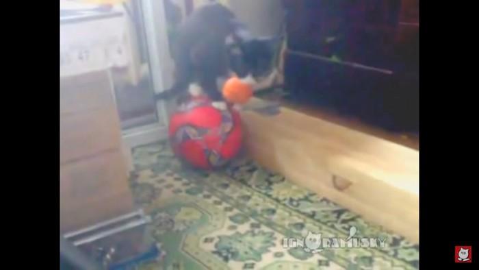 ボールに乗りなおす猫