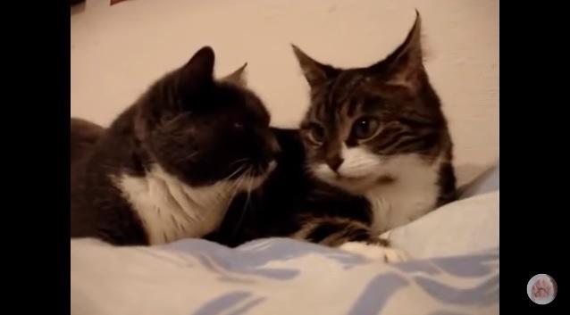 顔を見合わせる2匹の猫