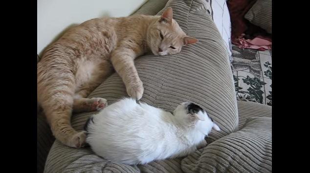 向かい合って寝る猫達