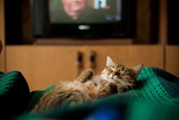 テレビの前で寝る猫