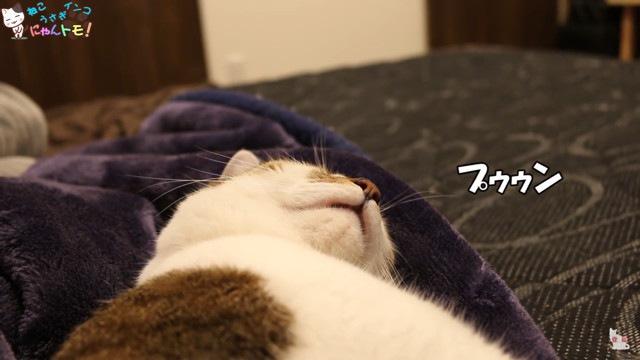 いびきのパターンを変える猫