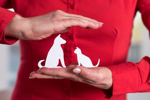 赤い服着た人の犬と猫