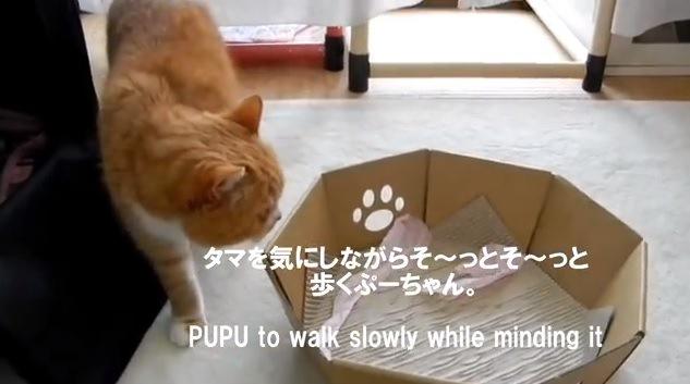ビビりながら歩く猫