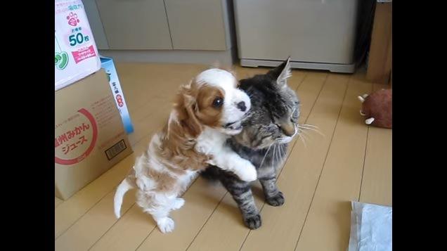 猫の耳をかじる犬
