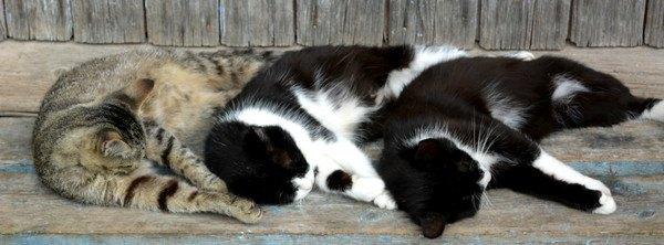 縁側に寝る3匹の猫