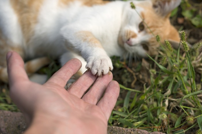 人の手の上に猫が手を置く