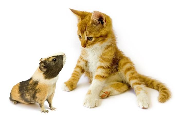 ハムスターと子猫