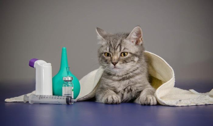 子猫と注射器の写真
