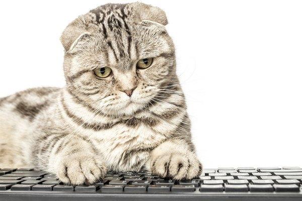 キーボードの上に乗る猫