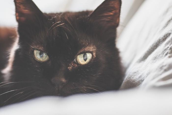横たわる黒猫