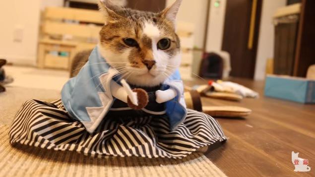 羽織袴を着た猫(正面)