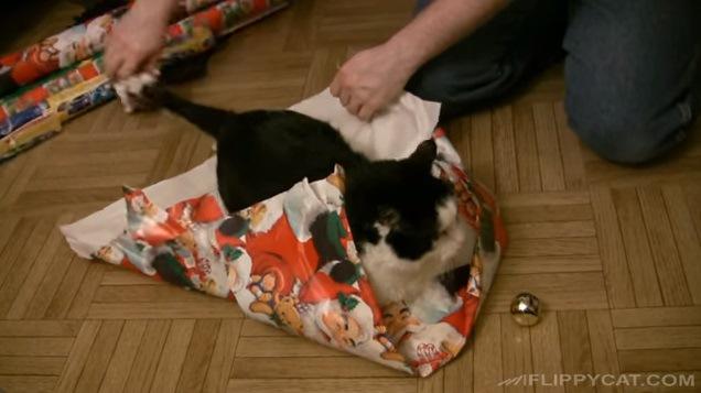 包みを開封される猫