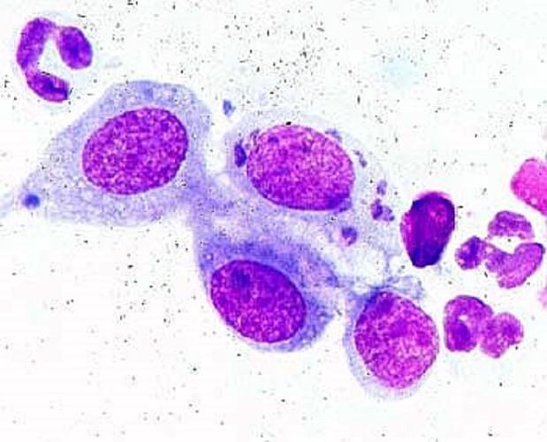猫クラミジアの病原体