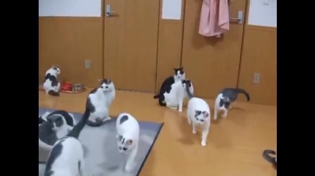 画面手前へ向かってくる猫たち