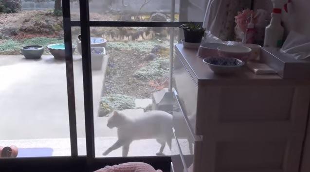 画面左に歩き出す猫