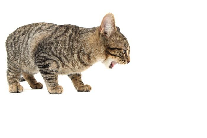 毛玉か何かを吐いている猫