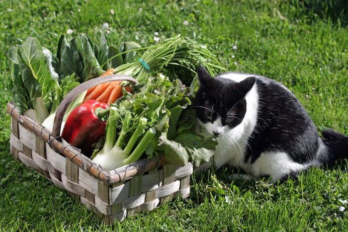 野菜が入ったカゴと猫