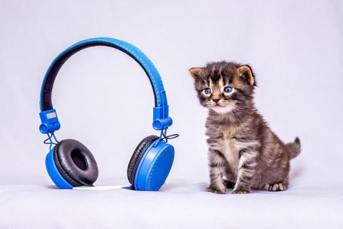 青いヘッドフォンと子猫
