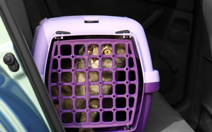 車内のキャリーにいる猫