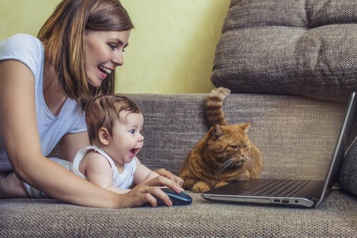 パソコンをする親子と猫
