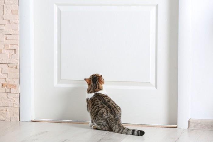白いドアを見上げている猫