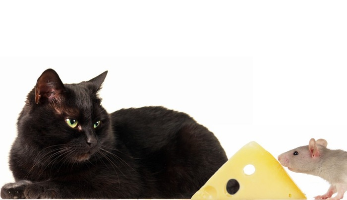 黒猫とチーズ