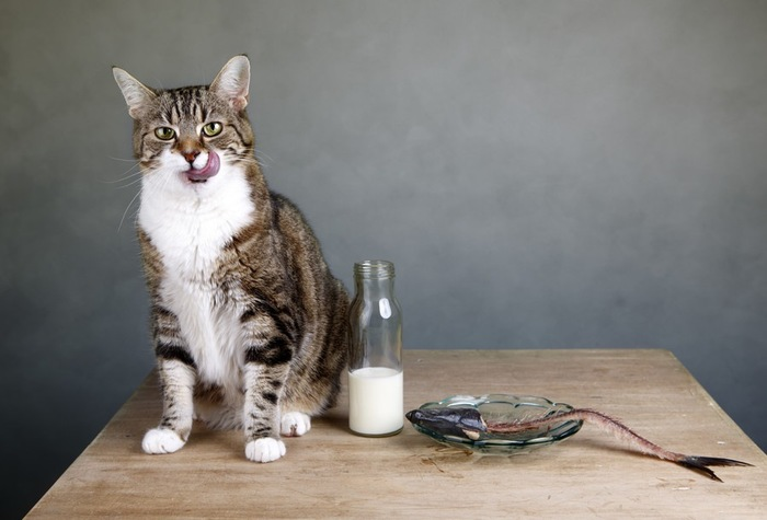 猫と牛乳とお魚