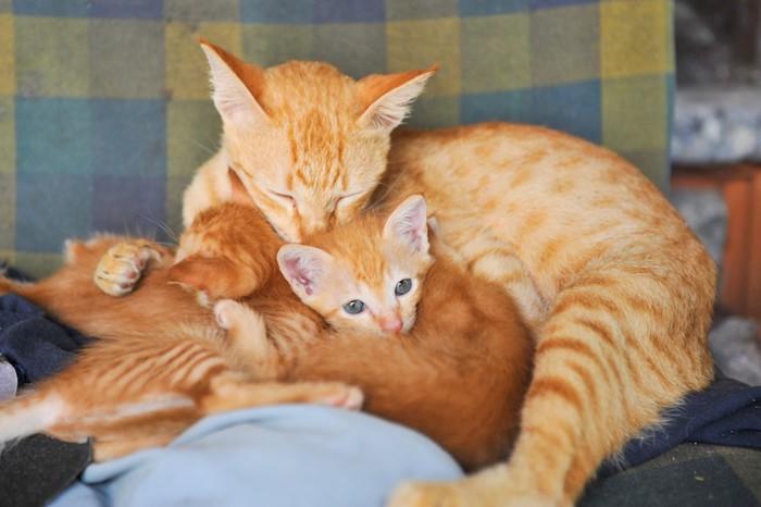子猫の毛づくろいをする母猫