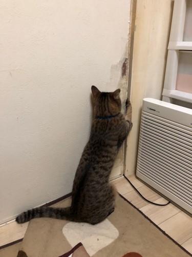 扉を開ける猫