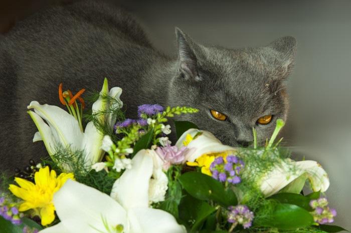 猫とユリの花束