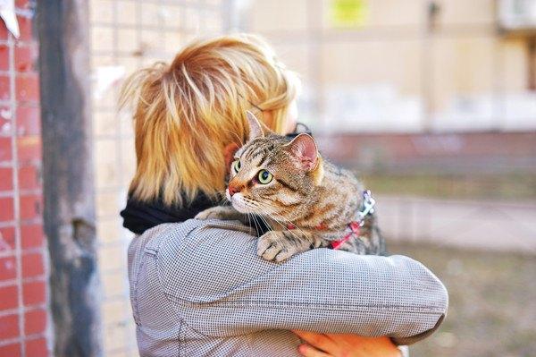 子供に抱っこされるキジ猫