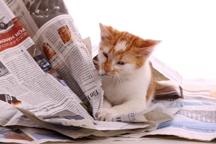 新聞紙を破壊する猫