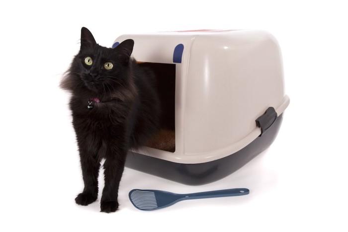 猫用トイレから出てきた黒猫