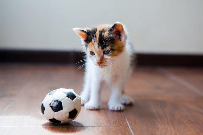ボールと子猫