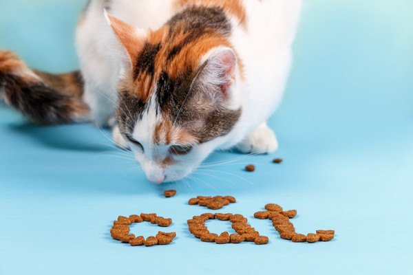 猫と並べられたキャットフード