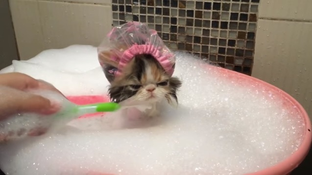 顔の下を洗われる子猫