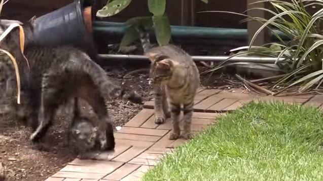 子猫を跨ぐ猫