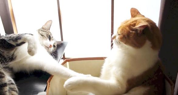 肉球をタッチする猫たち